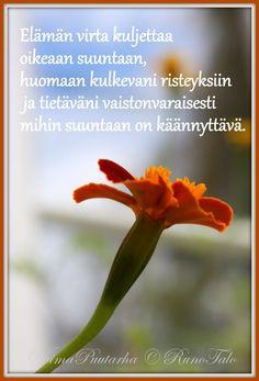 RunoTalon voimapuutarha: 11 voimarunoa & voimakorttia unelmoinnista: Elämän virta kuljettaa oikeaan suuntaan, huomaan kulkevani risteyksiin ja tietäväni vaistonvaraisesti mihin suuntaan on käännyttävä. Finnish Words, Affirmation Cards, Viria, Trust Yourself, Intuition, Affirmations, Poems, Prayers, Quotes