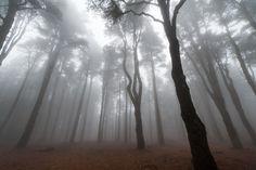 I love trees and fog