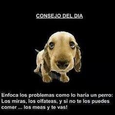 Enfoca los problemas como lo haría un perro...