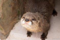 Disgruntled otter