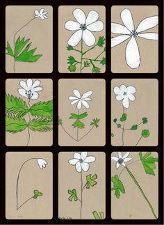 2. klasse tegner anemoner