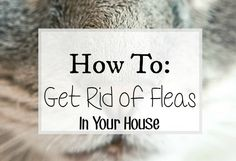 how to get rid of fleas quickly and easily