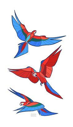 Studies - Macaw by oxboxer.deviantart.com on @deviantART