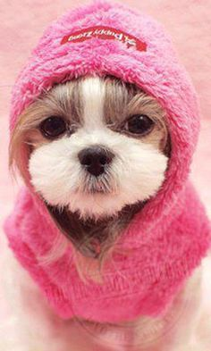 cutie in a pink hoodie