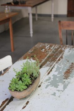 Love the green of the plant with the weathered wood and chipped paint
