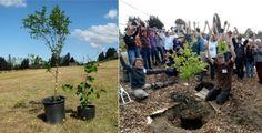 Botanic Notables: A Public Food Forest in Seattle | Garden Design