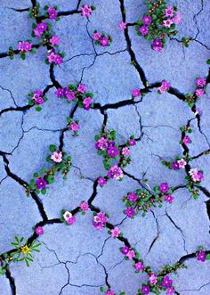 Hintergrundbilder iphone - Purple flowers like Violets growing from sidewalk cracks - - Hintergrundbilder Art Cute Backgrounds, Phone Backgrounds, Cute Wallpapers, Wallpaper Backgrounds, Iphone Wallpapers, Flower Wallpaper, Screen Wallpaper, Cool Wallpaper, Nature Wallpaper