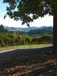 The vineyard surrounding the cooking school in Healdsburg, CA.
