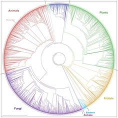 Phylogenetic Tree of Life - Global Genome Initiative Knowledge Portal