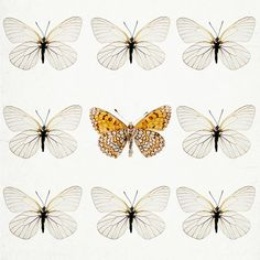 Butterflies - Nature Photography in Neutral Colors, Spring, Easter, Garden, Nursery Wall Art, Minimal - Not Like the Others via Etsy