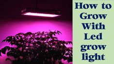 Many people do not know how to grow with led grow lights.In this post you will get step by information about led grow light.