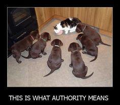 Cat authority....