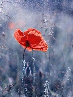 fiori rossi al suolo