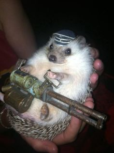 Sometimes Hedgehogs are not to be messed with...