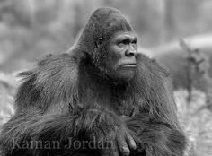 Bigfoot. Art by Kainan Jordan