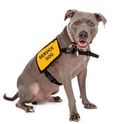 How to Get a Service Dog for Anxiety or Depression & the Costs of It