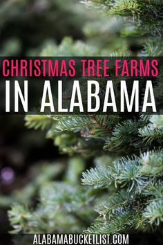 'Tis the season for choosing the perfect Christmas tree at one of these festive Christmas tree farms in Alabama. Make it a fun family affair! #christmas #christmastree #treefarm #holiday #alabama Christmas Travel, Christmas Tree Farm, Frazier Farms, Travel Usa, Travel Tips, Flocked Trees, Travel Reviews, United States Travel, Best Places To Travel