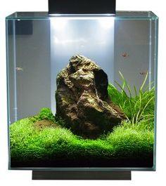fluval edge 12 gallon - Google Search Goldfish Aquarium, Aquarium Setup, Aquarium Design, Aquarium Fish Tank, Planted Aquarium, Aquarium Landscape, Nature Aquarium, Home Aquarium, Aquascaping