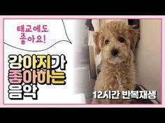 [중간광고X] 강아지가 좋아하는 음악 / puppy favorite music 犬の好きな音楽 - YouTube Dogs, Youtube, Animals, Animales, Animaux, Pet Dogs, Doggies, Animal, Animais