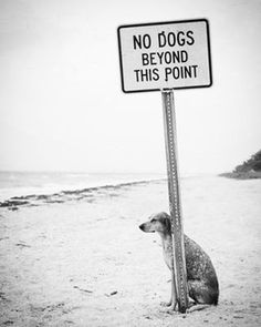 No Dogs... . . .  Another me@e_kiyani…