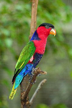 http://www.mundogump.com.br/top-seres-coloridos/