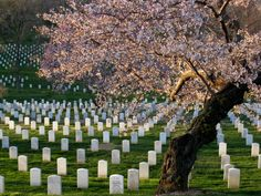 Arlington National Cemetery in Virginia - a beautiful place to visit, but also a very humbling experience...