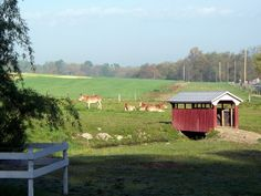 Amish Mules and Covered Footbridge. Courtesy: Cleo McCall, New Jersey (USA).
