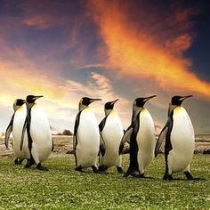SEO Techniques Post Penguin Update