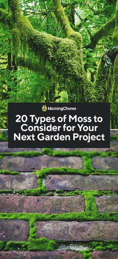 There are thousands of mosses out there, so it can be overwhelming to pick the right one for your project. We've rounded up the best types of moss. garden types 20 Types of Moss to Consider for Your Next Garden Project Next Garden, Dream Garden, Garden Types, Shade Garden, Garden Plants, Flower Gardening, Ideas Para Decorar Jardines, Moss Lawn, Types Of Moss