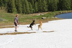 having fun in the Austrian mountains Mountains, Dogs, Fun, Pet Dogs, Doggies, Bergen, Hilarious