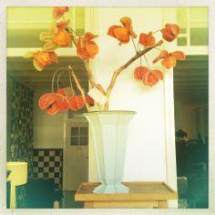 een prachtige 'Kardinaalsmuts' van Linda Nieuwstad, in een stalen vaas van Piet Hein Eek.