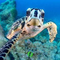 Turtle under water Gigi # Tortoise hotelpe Underwater Sea, Underwater Creatures, Ocean Creatures, Animals And Pets, Baby Animals, Funny Animals, Cute Animals, Animals Sea, Baby Sea Turtles