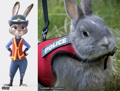 The police bunny from 'Zootopia' has a real-life counterpart.