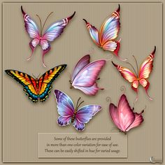Flutter: The butterfly collection contains 24 brightly colored hand-painted butterflies that you will use again and again!