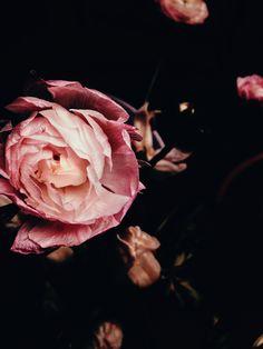 Rose pink.