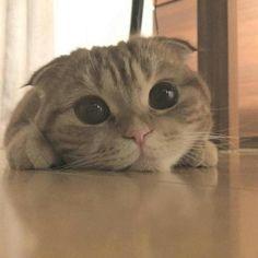 あったかい年の瀬│フェリシモ猫部ギャラリー