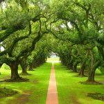 Los árboles salvan miles de vidas al año
