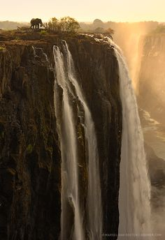 The Edge. An elephant at Victoria Falls, Zambia and Zimbabwe. Victoria Falls, or Mosi-oa-Tunya, is a waterfall in southern Africa on the Zambezi River at the border of Zambia and Zimbabwe. Chutes Victoria, Beautiful World, Beautiful Places, Simply Beautiful, Amazing Places, Beautiful Sunrise, Beautiful Scenery, Absolutely Stunning, Places Around The World