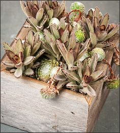 Rabbit Patch Succulent Garden Box - FREE Shipping!  $33.95 Look closely - it looks like a bunch of bunny rabbits in a cabbage patch! :) http://www.easytogrowbulbs.com/p-1681-rabbit-patch-succulent-garden-box-free-shipping.aspx