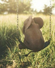 Swinging baby elephant ✨ Photo edited by Image Elephant, Elephant Love, Elephant Art, Happy Elephant, Cute Creatures, Beautiful Creatures, Animals Beautiful, Elephant Photography, Animal Photography