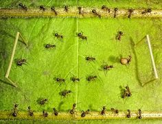 Russian photographer Andrey Pavlov has photographed ants in various scenarios, some in their natural environment while others Pavlov had sought to create.