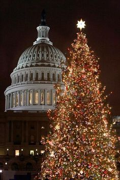 Christmas Tree Capitol Building Washington DC