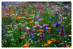 Blumenwiese http://fc-foto.de/33806539