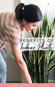 Healthy Home: Benefits of Houseplants - Cultivate Beauty Nutrition Articles, Health And Nutrition, Health And Wellness, Lower Blood Pressure, New Students, Natural Living, Houseplants, Natural Health, Health Benefits