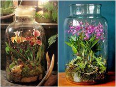 DIY - Jak zrobić ogród-terrarium? Aquarium, Jar, Plants, Terrariums, Home Decor, Gardening, Spring, Blog, Flowers
