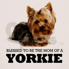 <3 Three times a Yorkie Mom <3