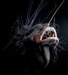 Fauna marina asombrosa