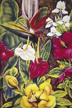 Vintage Tropical Flowers Poster By Hawaiian Legacy Archive - Printscapes Tropical Art, Tropical Flowers, Tropical Wallpaper, Vintage Hawaiian, Vintage Greeting Cards, All Poster, Vintage Flowers, Vintage Art, Fine Art America