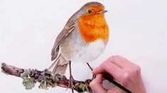 How to paint a Robin for your Christmas cards - Anna Mason Art