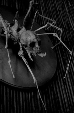 Spider? Surely a skeleton made from nightmares...